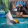 Дельфинарии, океанариумы в Дрезне