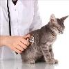 Ветеринарные клиники в Дрезне